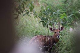 Chobe National Park Botswana and Victoria Falls in...
